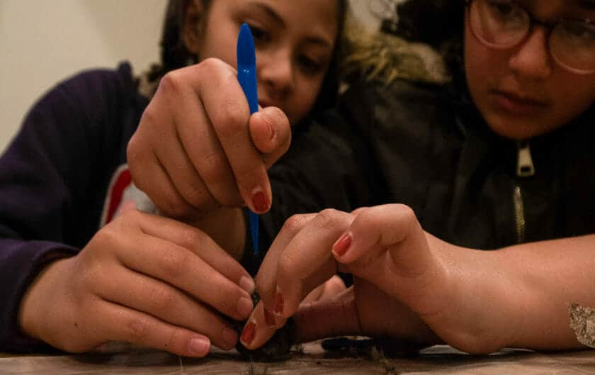 Two Pali students dissect owl pellets